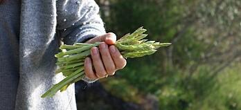 Grönsaker som börjar på S – vilka kan du?