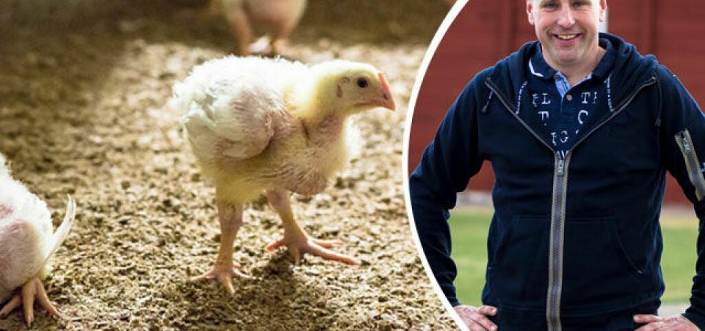 Fötterna avslöjar – så mår kycklingen